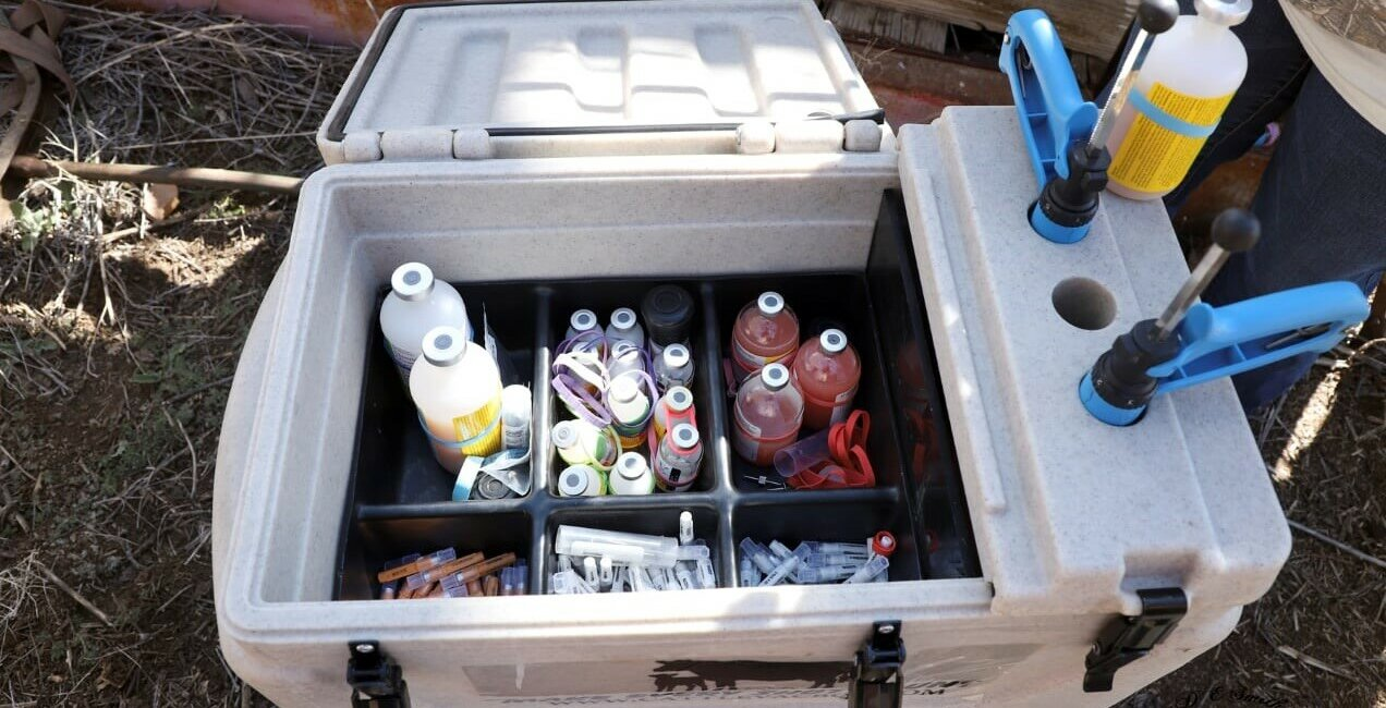 Open Boss Cooler with Vaccines, Syringes, and Needles
