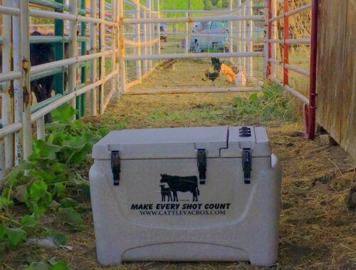 Image of Boss Vaccine Cooler in Chute